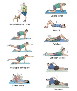 Some of the yoga postures in our healthy back yoga sequences at Yoga Farm.